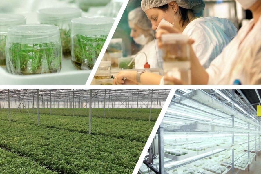 Management Buy Out van Oprins Plant creëert Plant Select